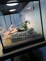 Bearded Dragon Reptiles for sale in Beaverton, OR, USA. price: NA