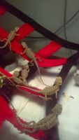 Bearded Dragon Reptiles for sale in Fort Lauderdale, FL, USA. price: NA