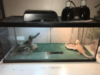 Bearded Dragon Reptiles for sale in East Liverpool, OH 43920, USA. price: NA