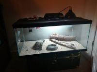 Bearded Dragon Reptiles for sale in Ponte Vedra Beach, FL 32082, USA. price: NA