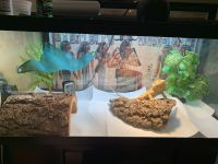 Bearded Dragon Reptiles for sale in Cleveland, OH, USA. price: NA