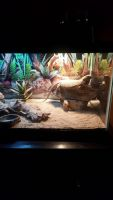 Bearded Dragon Reptiles for sale in Bartlett, TN, USA. price: NA