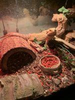 Bearded Dragon Reptiles for sale in Rio Rancho, NM 87144, USA. price: NA