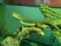 Bearded Dragon Reptiles for sale in Orlando, FL 32824, USA. price: NA