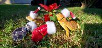 Bearded Dragon Reptiles for sale in Huntington Beach, CA, USA. price: NA
