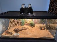 Bearded Dragon Reptiles for sale in Newport News, VA, USA. price: NA