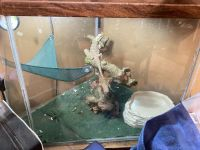 Bearded Dragon Reptiles for sale in Joshua, TX 76058, USA. price: NA