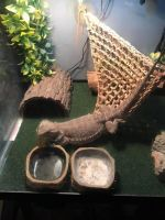 Bearded Dragon Reptiles for sale in Franklin, IN 46131, USA. price: NA