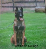 Belgian Shepherd Dog (Malinois) Puppies for sale in Centerburg, OH 43011, USA. price: NA