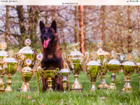 Belgian Shepherd Dog (Malinois) Puppies for sale in Oakdale, TN, USA. price: NA