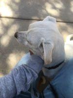 Bergamasco Puppies Photos