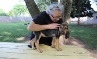 Bloodhound Puppies for sale in West Lafayette, IN, USA. price: NA
