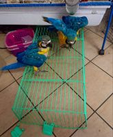 Blue-and-yellow Macaw Birds Photos