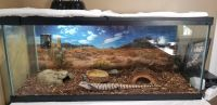 Blue-Tongued Skink Reptiles Photos