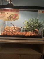 Boa constrictor Reptiles for sale in Homosassa, FL, USA. price: NA