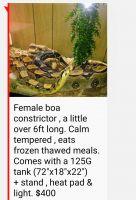 Boa constrictor Reptiles for sale in Hammond, IN, USA. price: NA