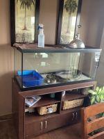 Boa constrictor Reptiles for sale in Altoona, IA, USA. price: NA
