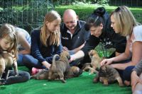 Boerboel Puppies for sale in Philadelphia, PA, USA. price: NA
