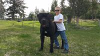 Boerboel Puppies for sale in Long Creek, OR 97856, USA. price: NA