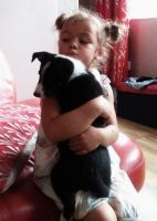 Border Collie Puppies for sale in Portland, OR, USA. price: NA