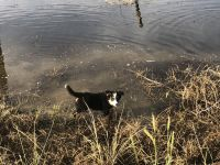 Border Collie Puppies for sale in Rush, CO, USA. price: NA
