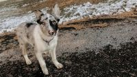 Border Collie Puppies for sale in Lancaster, PA, USA. price: NA
