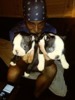 Boston Terrier Puppies for sale in Summer Shade, KY 42166, USA. price: NA