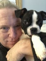 Boston Terrier Puppies for sale in Williamsport, PA 17701, USA. price: NA