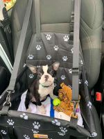 Boston Terrier Puppies for sale in Lancaster, PA, USA. price: NA
