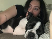 Boston Terrier Puppies for sale in Cheyenne, WY, USA. price: NA
