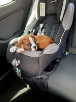 Boxer Puppies for sale in 11254 58th St, Pinellas Park, FL 33782, USA. price: NA