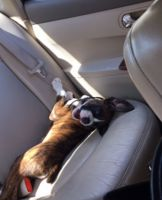 Boxer Puppies for sale in Lilburn, GA 30047, USA. price: NA