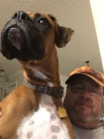 Boxer Puppies for sale in Odenville, AL 35120, USA. price: NA