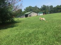 Brittany Puppies for sale in Coxs Creek, KY, USA. price: NA