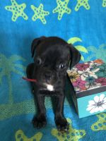 Bugg Puppies for sale in Wildwood, GA 30757, USA. price: NA
