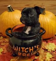 Bugg Puppies for sale in Baltimore, MD, USA. price: NA