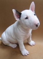 Bull Terrier Puppies for sale in Durham, NC, USA. price: NA