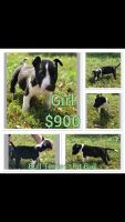 Bull Terrier Puppies for sale in Yakima, WA 98903, USA. price: NA