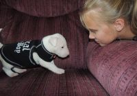Bull Terrier Miniature Puppies for sale in San Jose, CA, USA. price: NA