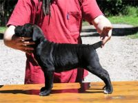 Cane Corso Puppies for sale in Gainesville, FL, USA. price: NA