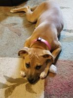 Catahoula Cur Puppies for sale in Calhoun, LA 71225, USA. price: NA