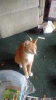 Mixed Cats for sale in Greensburg, PA 15601, USA. price: NA