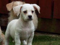 Cavalier King Charles Spaniel Puppies for sale in 813 FL-436, Altamonte Springs, FL 32714, USA. price: NA