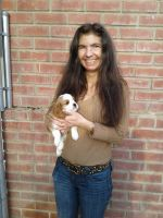 Cavalier King Charles Spaniel Puppies for sale in Rancho Cordova, CA, USA. price: NA
