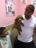 Cavapoo Puppies for sale in Roosevelt, NY, USA. price: NA