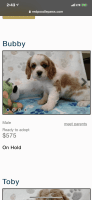 Cavapoo Puppies for sale in Owings Mills, MD, USA. price: NA