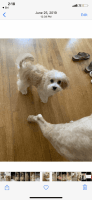 Cavapoo Puppies for sale in Johnson City, TN, USA. price: NA