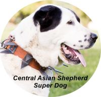 Central Asian Shepherd Puppies for sale in Lenox, MI 48048, USA. price: NA