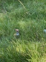 Chihuahua Puppies for sale in Jonesboro, GA 30238, USA. price: NA