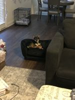 Chihuahua Puppies for sale in Austell, GA, USA. price: NA